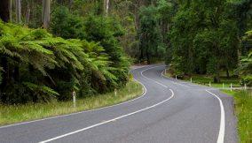 A road winds thru the Black Spur near Healesville, Victoria, Australia